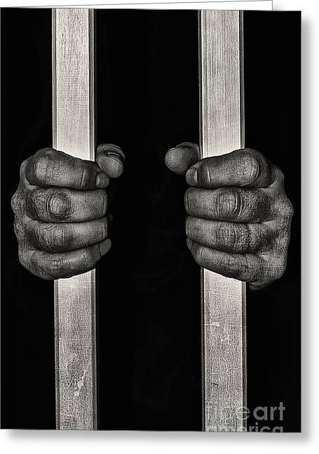 Behind Bars Greeting Card by Svetlana Sewell