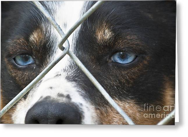 Behind Fences Greeting Card by Heiko Koehrer-Wagner
