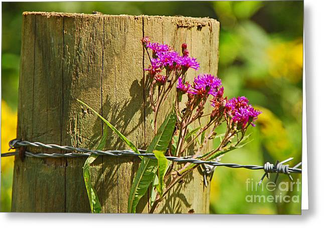 Behind The Fence Greeting Card by Mary Carol Story
