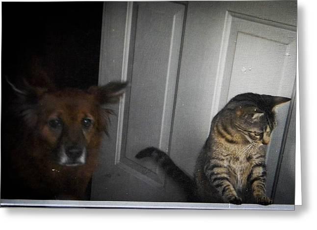 Behind The Screen Door Greeting Card