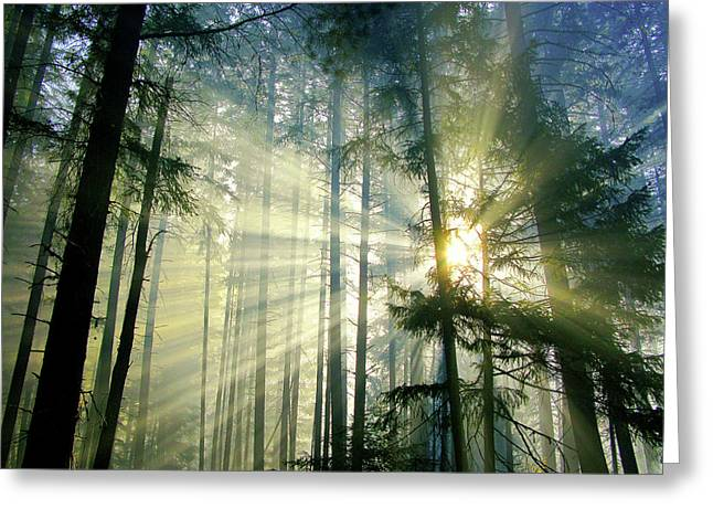 Behold The Light In The Fall Forest Greeting Card by Diane Schuster
