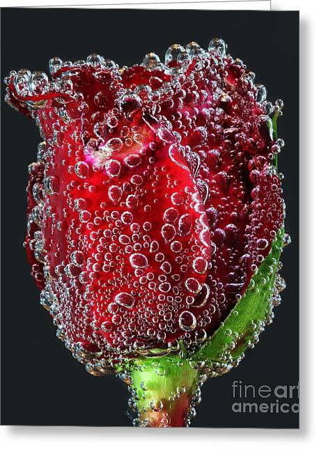 Bejeweled Rose Greeting Card by ELDavis Photography