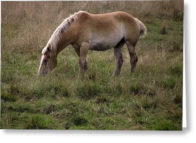 Belgian Draft Horse Greeting Card by Joyce  Wasser