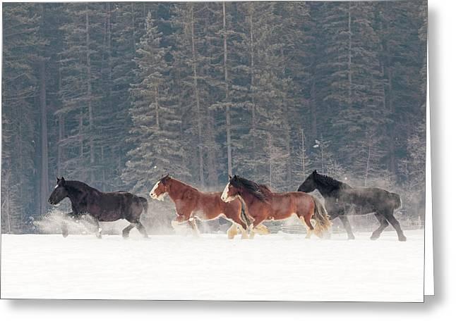 Belgian Horse Roundup In Winter Greeting Card