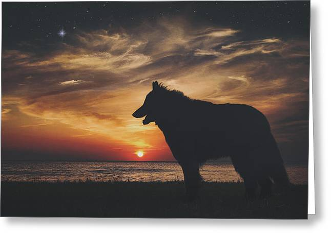 Belgian Sheepdog At Sunset Greeting Card by Wolf Shadow  Photography