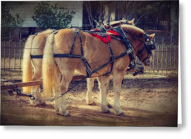 Belgium Draft Horses Greeting Card