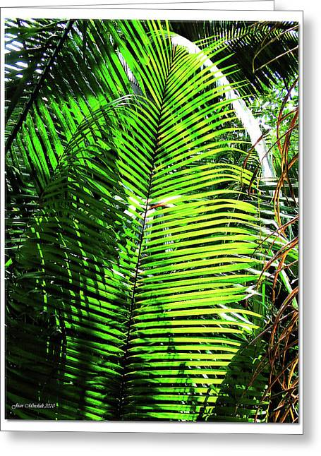 Belize Caracol Jungle Greeting Card