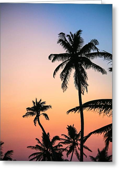 Belize Palms Greeting Card