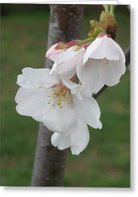 Bell Blossoms Greeting Card by Wide Awake Arts