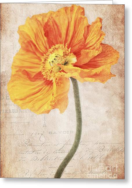Bella Orange Greeting Card