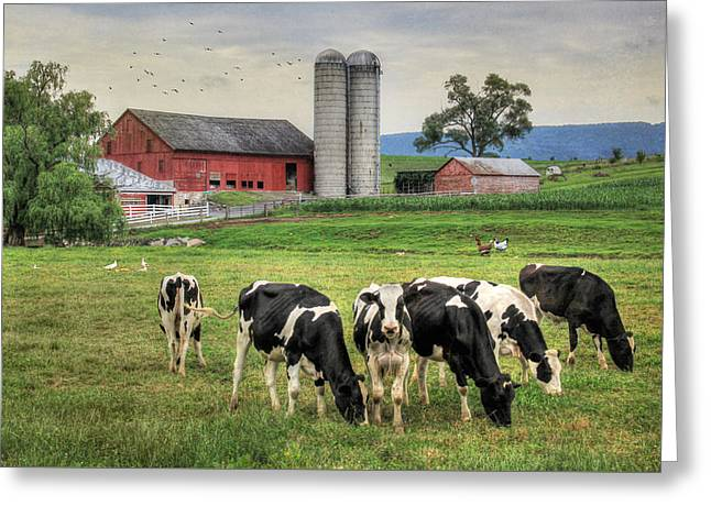 Belleville Cows Greeting Card