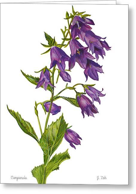 Bellflower - Campanula Greeting Card by Janet  Zeh