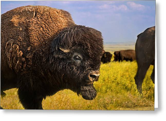 Belligerent Bison Greeting Card by Tracy Munson