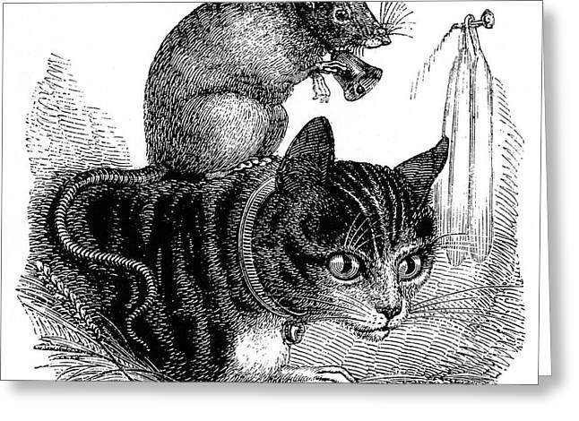Belling The Cat  A Mouse Wearing A Bell Greeting Card