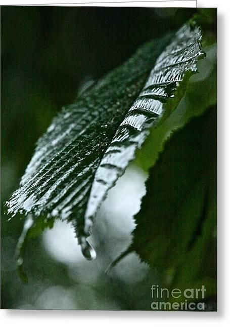 Bellissima Primavera Greeting Card by  Andrzej Goszcz