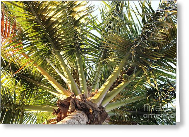 Below A Palm Tree Greeting Card