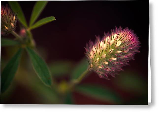 Below The Flower Line Greeting Card by Bob Orsillo
