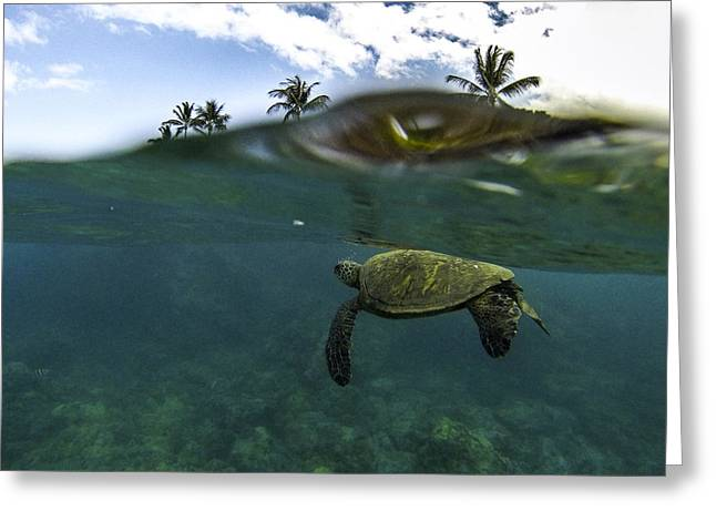 Below The Surface Greeting Card by Brad Scott