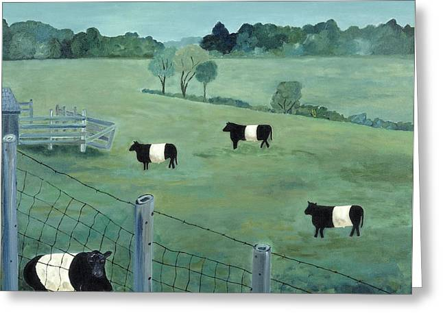 Belted Galloways Greeting Card