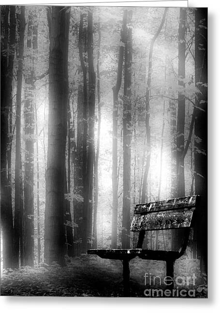 Bench In Michigan Woods Greeting Card