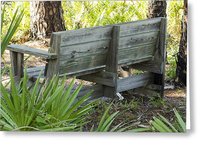 Bench In Nature Greeting Card