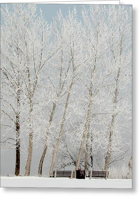Greeting Card featuring the photograph Benches And Hoar Frost Trees by Rob Huntley