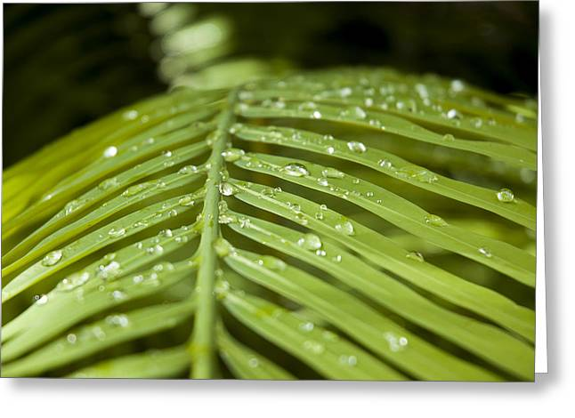 Greeting Card featuring the photograph Bending Ferns by Carolyn Marshall