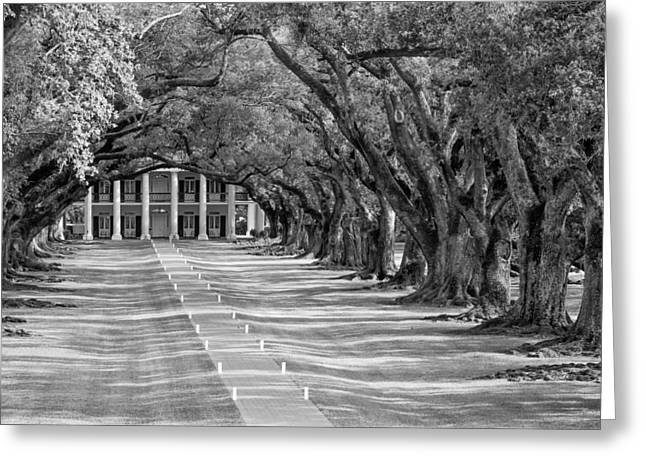 Beneath Live Oaks Bw Greeting Card by Steve Harrington
