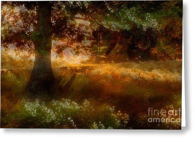 Beneath The Giants - A Tranquil Moments Landscape Greeting Card