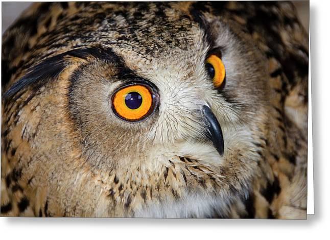 Bengal Eagle Owl Or Indian Eagle Owl Greeting Card