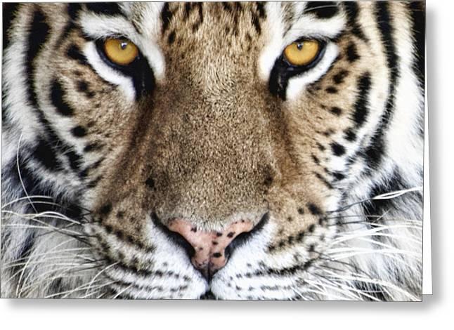 Bengal Tiger Eyes Greeting Card by Tom Mc Nemar