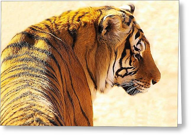 Bengal Tiger In Thought Greeting Card by JAXINE Cummins