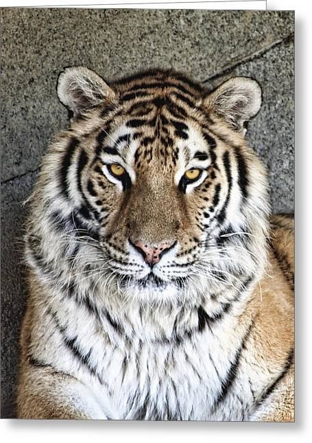 Bengal Tiger Vertical Portrait Greeting Card by Tom Mc Nemar