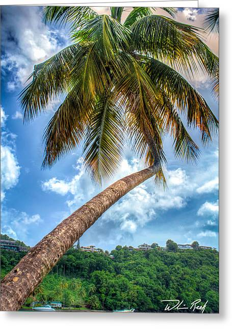 Bent Palm Greeting Card by William Reek