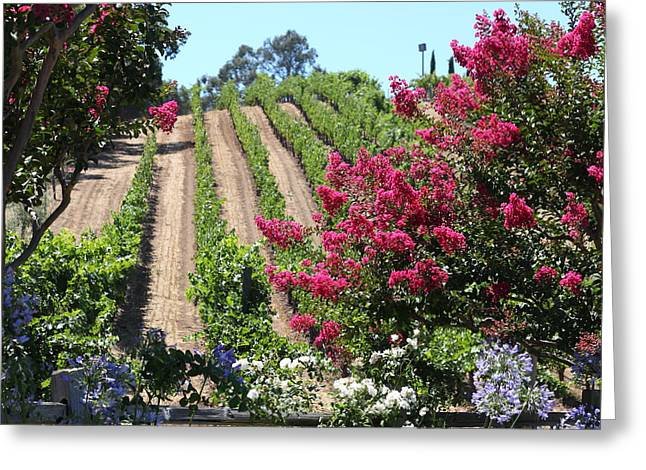 Benziger Winery In The Sonoma California Wine Country 5d24495 Square Greeting Card