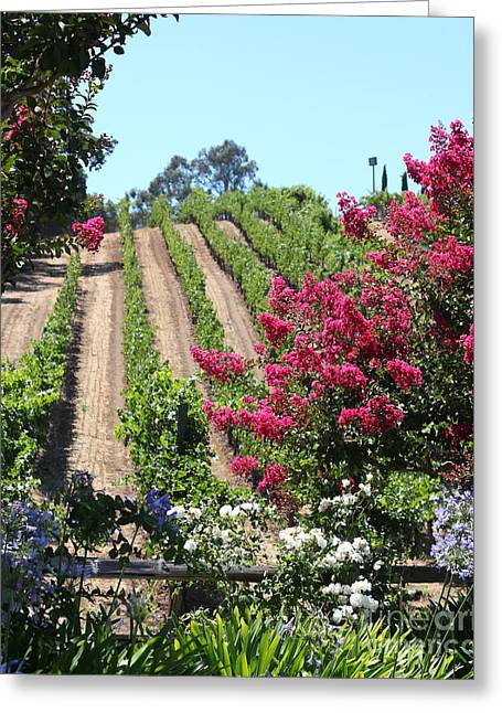 Benziger Winery In The Sonoma California Wine Country 5d24495 Vertical Greeting Card by Wingsdomain Art and Photography
