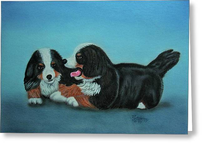 Bernese Mountain Puppies Greeting Card by Thomas J Herring