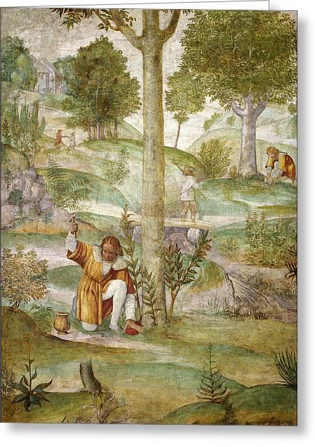 Bernardino Luini, Cephalus Hiding The Jewels Greeting Card by Litz Collection