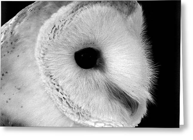 Bernie The Barn Owl Greeting Card by Chris Whittle