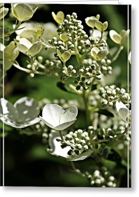 Berries And Blooms In Monochromatic Green Greeting Card