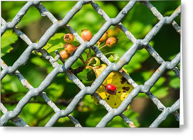 Berries And The City - Featured 3 Greeting Card by Alexander Senin