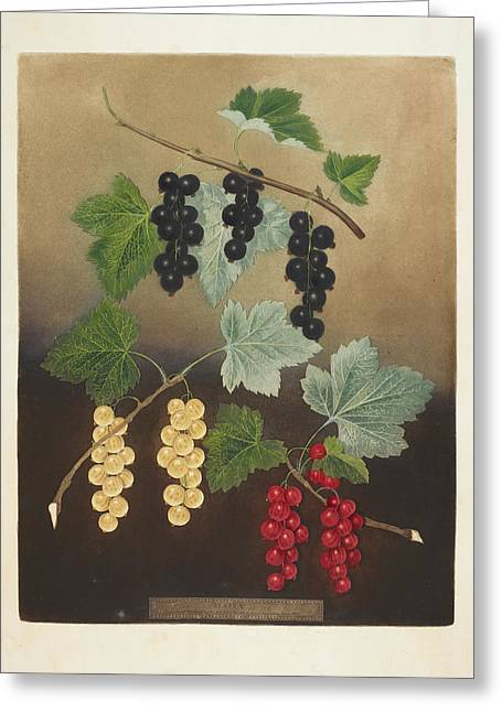 Berries Greeting Card by British Library