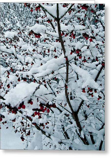 Berries In Snow Greeting Card by Nickaleen Neff