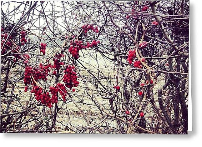 Berries In The Hedgerow Greeting Card
