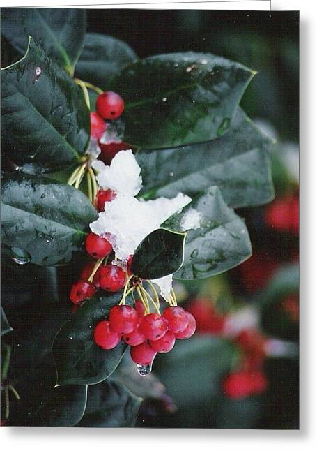 Berries In The Snow Greeting Card