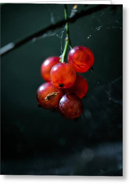 Berries Greeting Card by Leif Sohlman