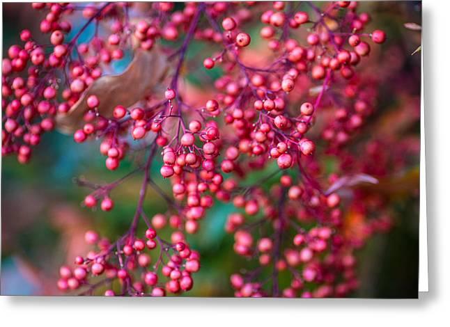 Berries Greeting Card by Mike Lee