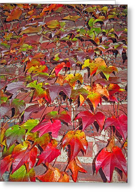 Berries Vines And Brick Greeting Card by Barbara McDevitt