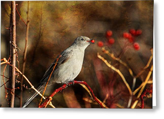 Berry Delighted Greeting Card by Donna Kennedy
