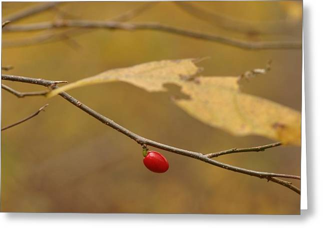 Berry Greeting Card by Mark Russell